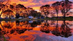 Coonawarra Bush Holiday Park - Hotel Accommodation