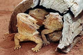 Alice Springs Reptile Centre - Hotel Accommodation