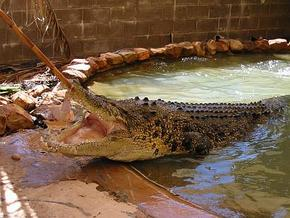 Wyndham Zoological Gardens and Crocodile Park - Hotel Accommodation