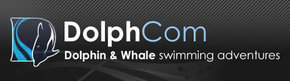Dolphcom - Dolphin & Whale Swimming Adventures - Hotel Accommodation