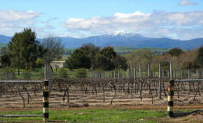 Buller View Wines - Hotel Accommodation