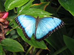 Butterfly Farm - Hotel Accommodation
