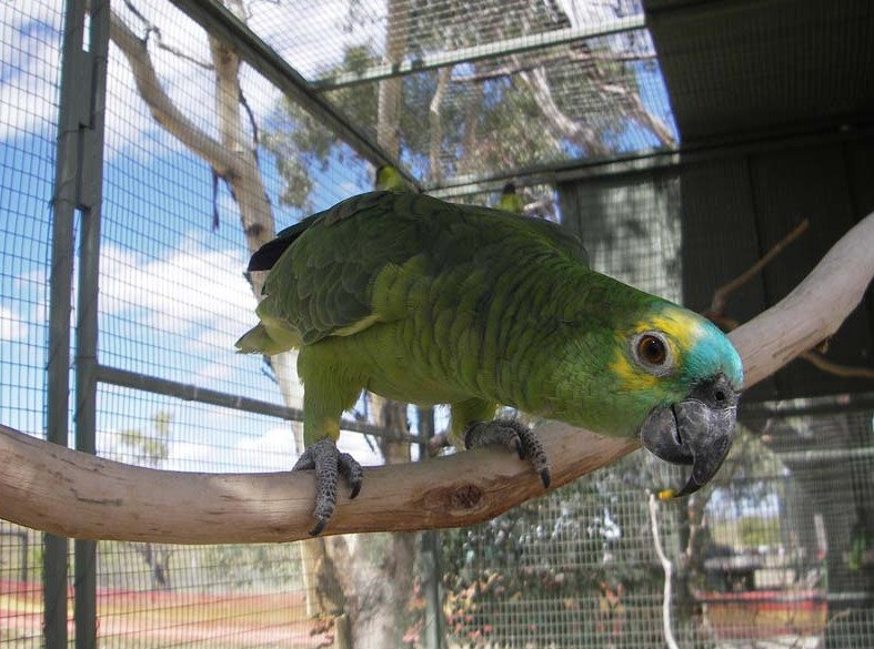 Darling Downs Zoo - Hotel Accommodation