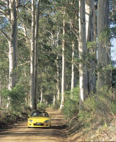 Mount Shadforth Scenic Drive - Hotel Accommodation