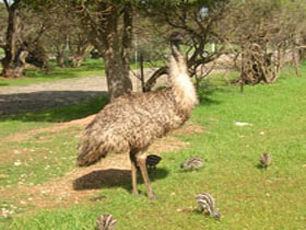 Minlaton Fauna Park - Hotel Accommodation