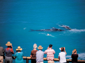 Whale Watching At Head Of Bight - Hotel Accommodation