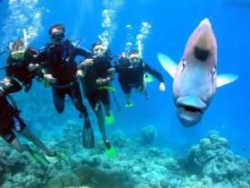 Jew Shoal Dive Site - Hotel Accommodation