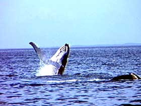 Whale Watching - Hotel Accommodation
