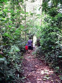 Malanda Falls Rainforest Walk Malanda Falls Conservation Park - Hotel Accommodation