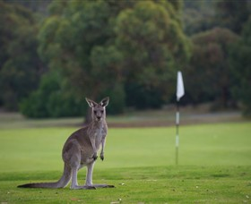 Anglesea Golf Club - Hotel Accommodation