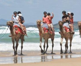 Camel Rides with Coffs Coast Camels - Hotel Accommodation