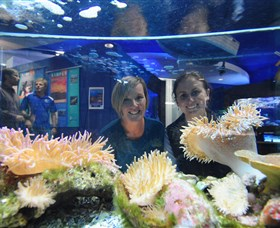 Solitary Islands Aquarium - Hotel Accommodation