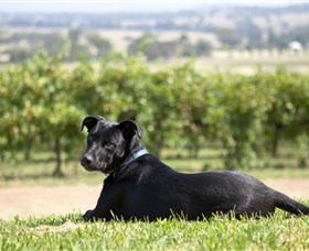 Moothi Estate Vineyard and Cellar Door - Hotel Accommodation