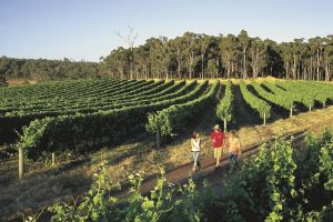 Margaret River Caves Wine and Cape Leeuwin Lighthouse Tour from Perth - Hotel Accommodation