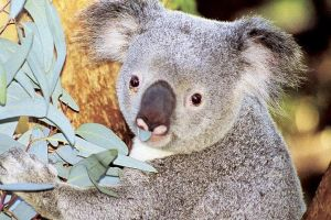 Perth Zoo General Entry Ticket and Sightseeing Cruise - Hotel Accommodation
