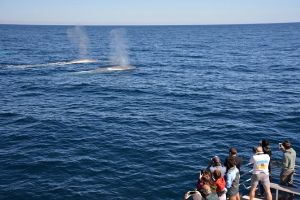 Blue Whale Perth Canyon Expedition - Hotel Accommodation