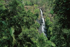 Mapleton Falls National Park - Hotel Accommodation