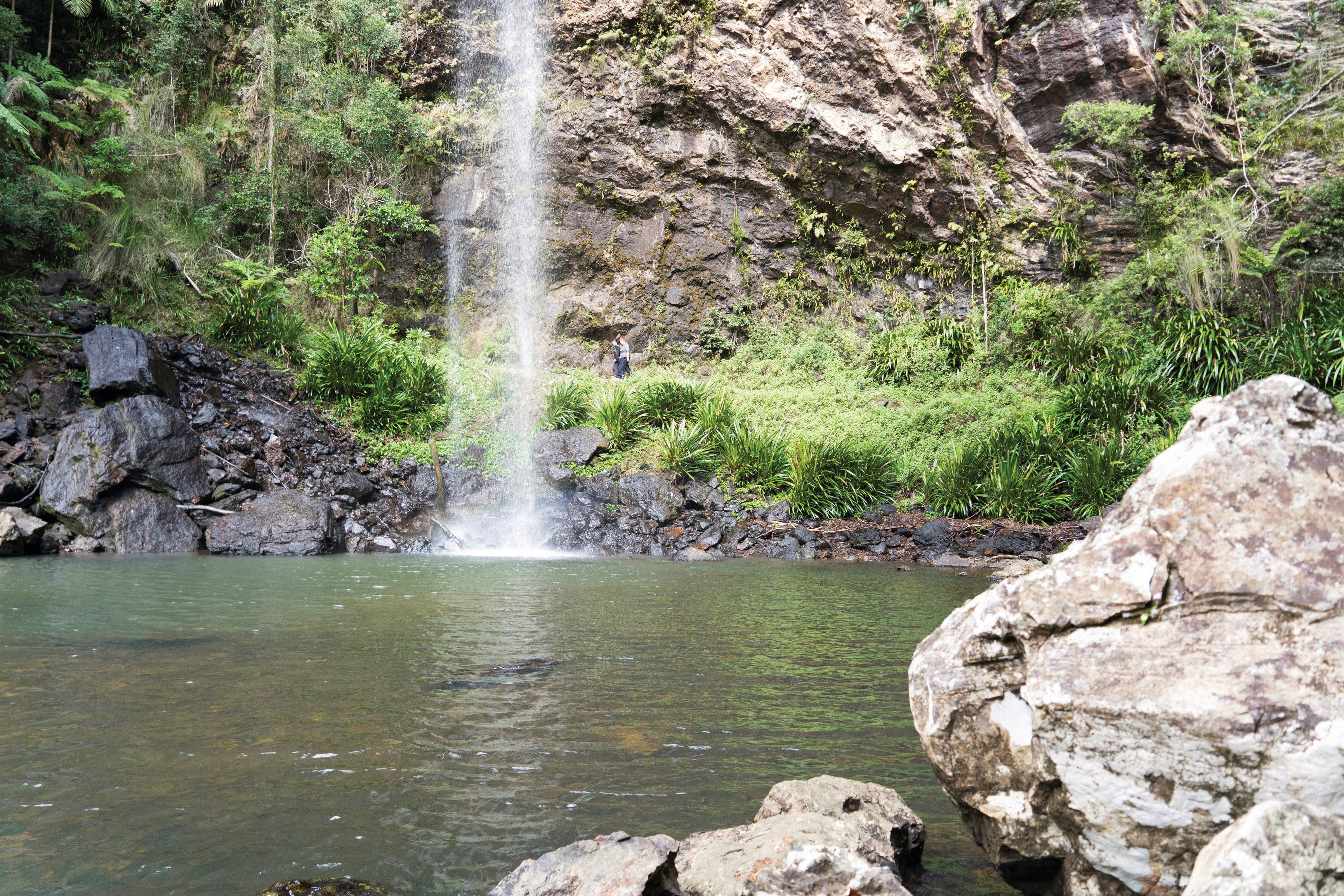 Twin Falls Circuit Springbrook National Park - Hotel Accommodation