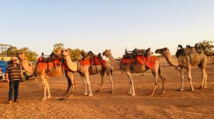 Broken Hill Camels - Hotel Accommodation