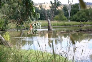 Tumut Wetlands - Hotel Accommodation