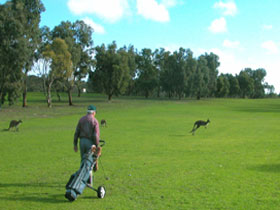 Coffin Bay Golf Club - Hotel Accommodation