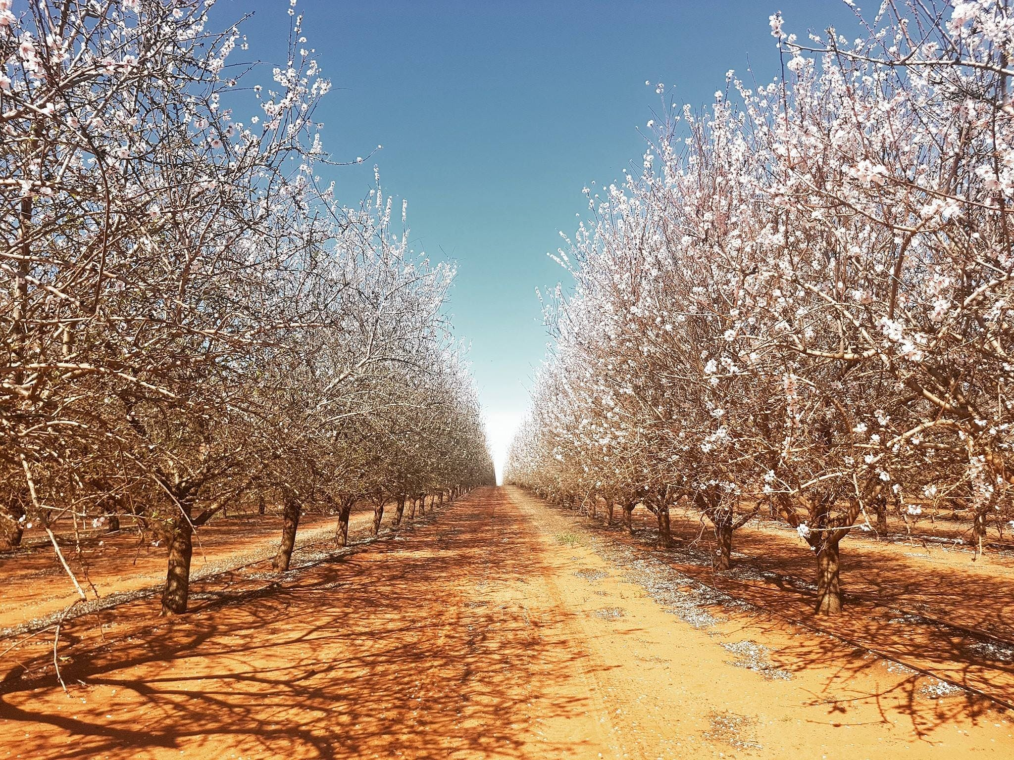 Mallee Almond Blossom Festival - Hotel Accommodation