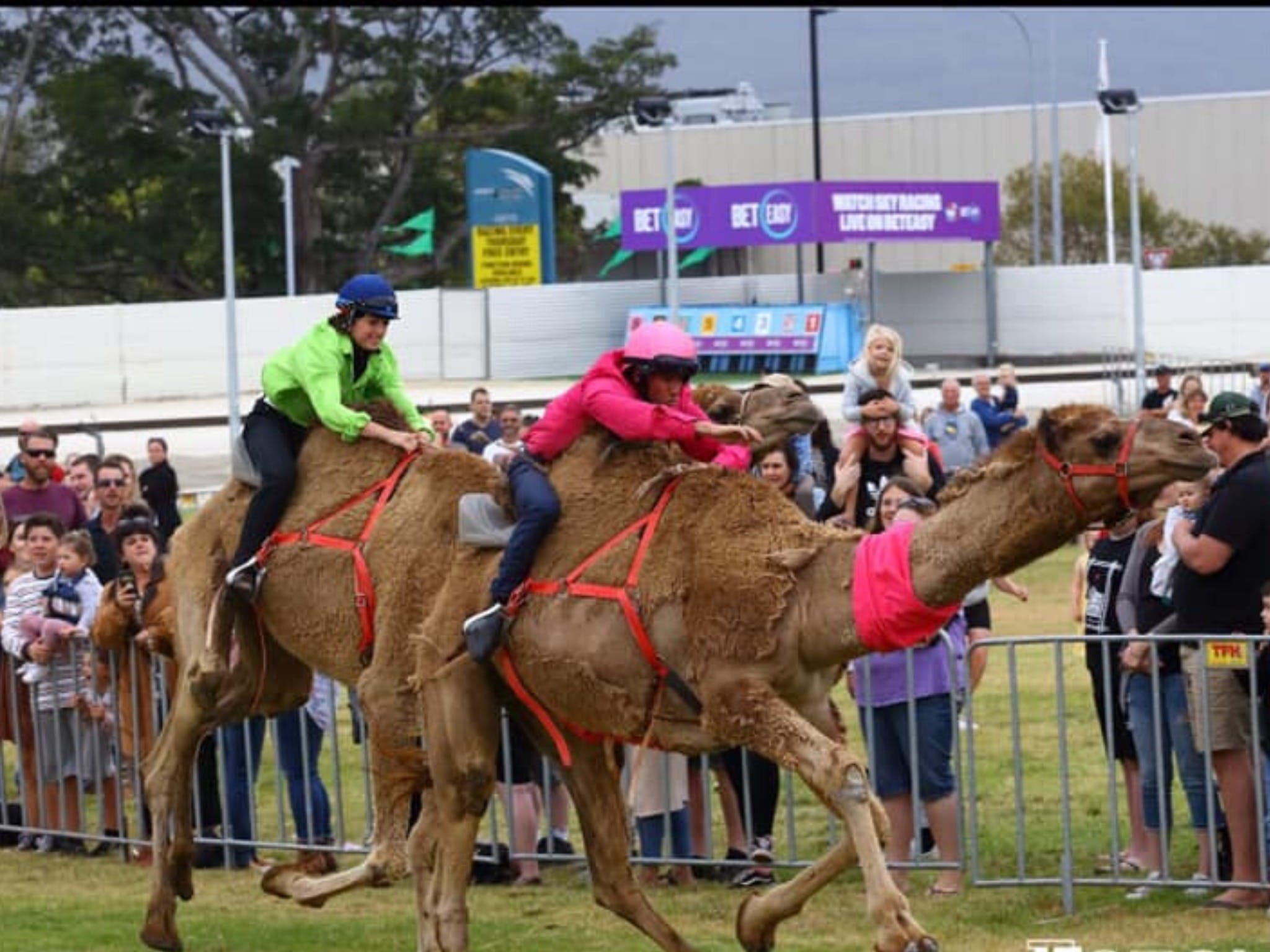 Camel Races at Gosford Showgrounds - Hotel Accommodation