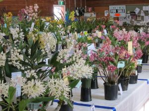 Sapphire Coast Orchid Club Spring Orchid Show - Hotel Accommodation