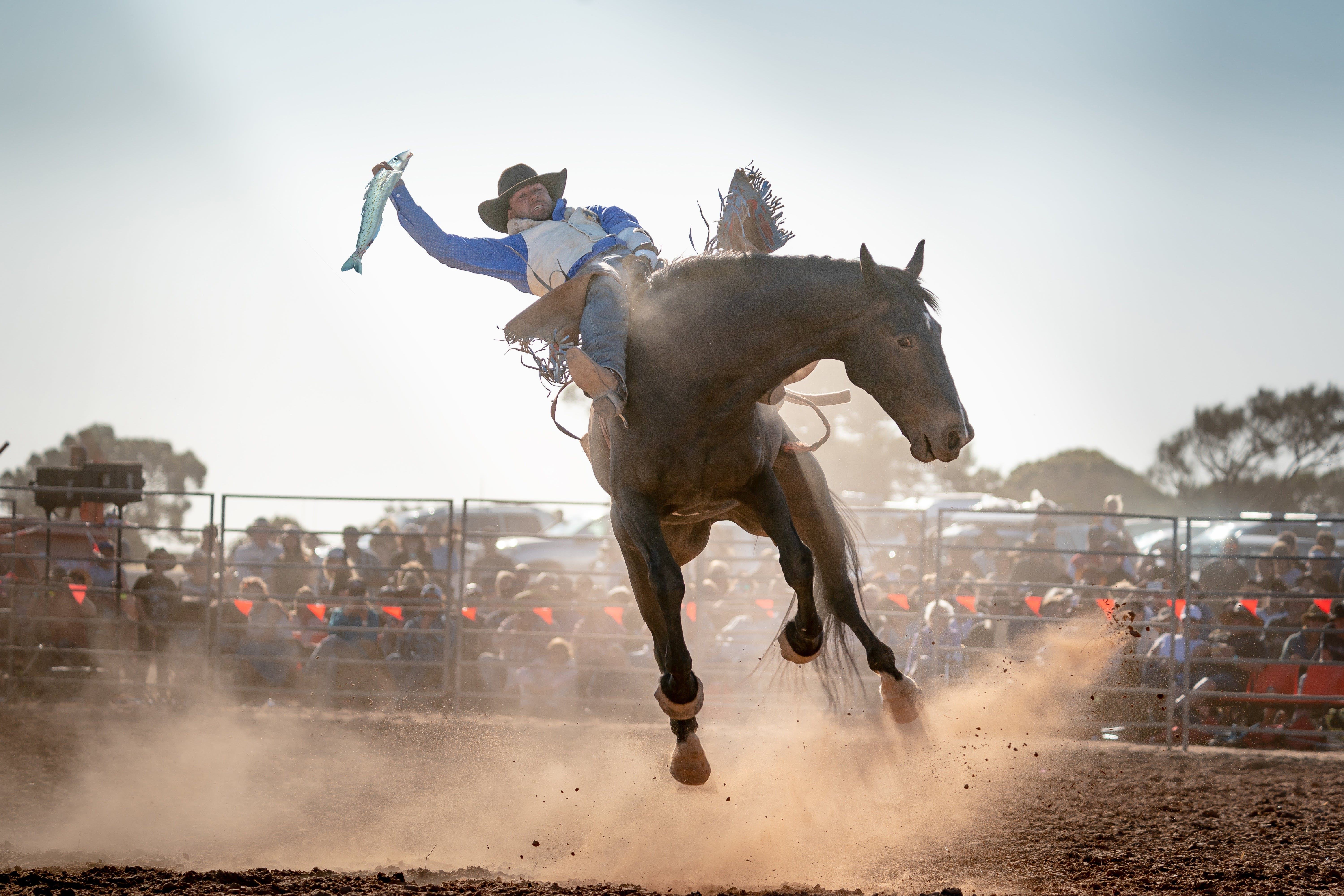 Rodeo by the Sea - Streaky Bay - Hotel Accommodation